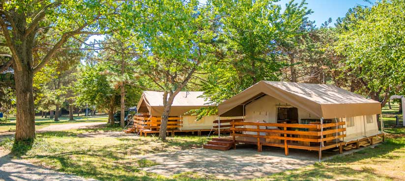 ../../images/news/SUNFLOWER CAMPING SAVUDRIJA